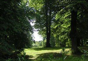 Trädens hemliga liv @ Värdshuset Koppartälten  | Solna | Stockholms län | Sverige